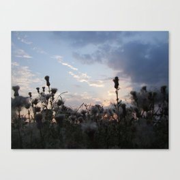 Dusk with Thistles Canvas Print