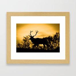 The King at Sunset Framed Art Print