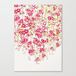 Cherry Blossom 1 Canvas Print