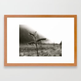 Lupine Seeds at the Glacier Framed Art Print