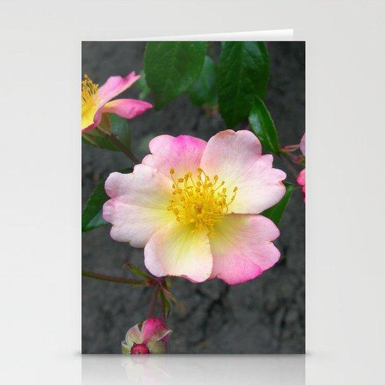 wild rose IV Stationery Cards