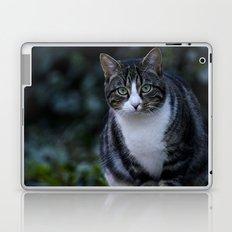 Green eyes cat Laptop & iPad Skin