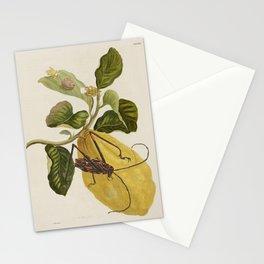 Maria Sibylla Merian Lemon Stationery Cards