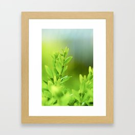 Green Harmony Framed Art Print