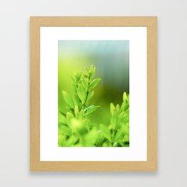 Green Harmony Framed Art Print