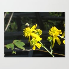 Pollen for my Queen Canvas Print