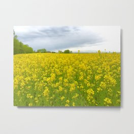 Fields of Flowers in the French Countryside, Dijon, France Metal Print