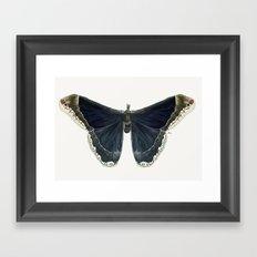 Callosamia Promethea Framed Art Print