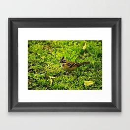 Running Sparrow Framed Art Print