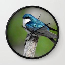 Male Tree Swallow II Wall Clock