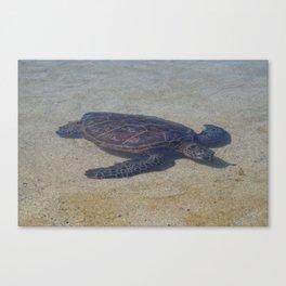 Honu Swimming Canvas Print