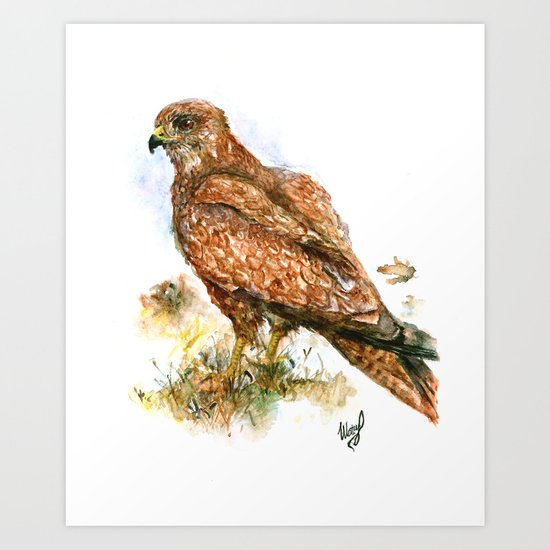 Young hawk Art Print