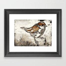 Sparrow | Etching Framed Art Print