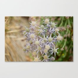 Roadside Flowers Canvas Print