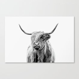 portrait of a highland cattle Canvas Print