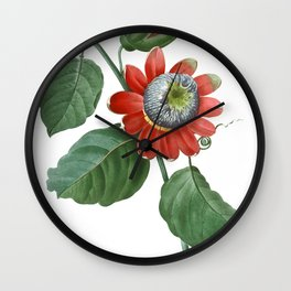 HIGHEST QUALITY botanical poster of Passiflora Alata Wall Clock
