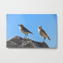 TracTrac Chats Perched on a Desert Rock Metal Print