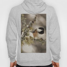 Chickadee and Old Man's Beard - Algonquin Park Hoody