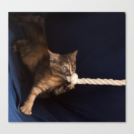 cute striped ginger kitten plays with knotted rope  Canvas Print