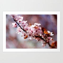 Cherryblossom Art Print