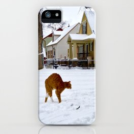 Cat in Winter Spots Dog iPhone Case