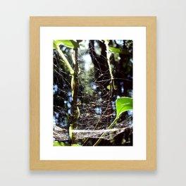 Web of Life Framed Art Print
