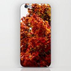 Autumn red tree iPhone & iPod Skin