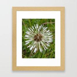 Dandelion In The Rain Framed Art Print