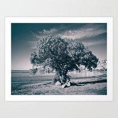 The Pohutukawa, New Zealand's Christmas Tree. Art Print