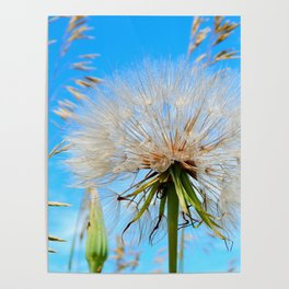 Seeds Ready to Fly Poster