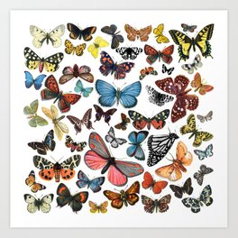 BUTTERFLY CLUSTER Art Print