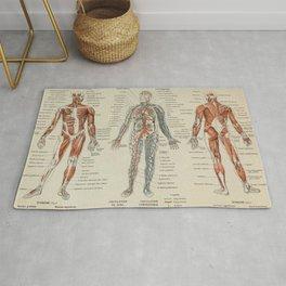 Anatomy Vintage Scientific Illustration French Language Encyclopedia Lithographs Educational Rug