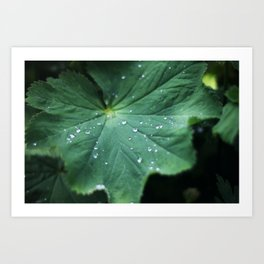 Leaf Drops Art Print