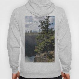 Beside The Falls, Beautiful Old Pine Tree Stands Sentry Beside A Watefall Hoody