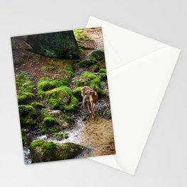 Hidden Spring in Winter Stationery Cards