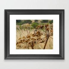 Navaro Bluffs, fall flowers Framed Art Print