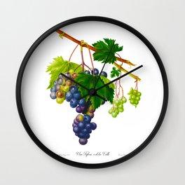 Grape, Purple Grape, Uva trifera, o di tre Volte, Vite trifera, Vite d'Ischia, Grape from Ischia by Antique Print Giorgio Gallesio Wall Clock