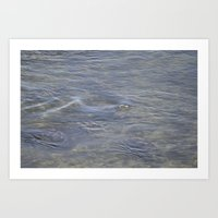 seal Art Prints featuring Seal by Phil Hinkle Designs