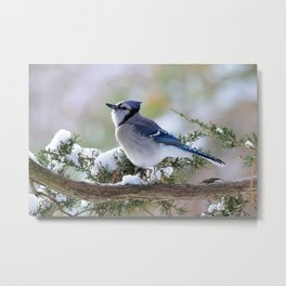 Look Skyward Blue Jay Metal Print