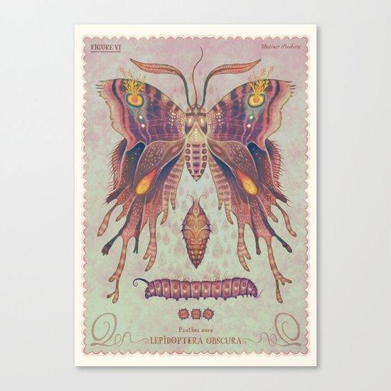 Panthea aura Canvas Print