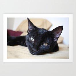 Black Cats are Good Luck Art Print