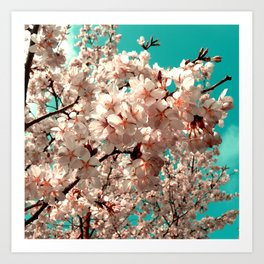 cherry blossom III Art Print