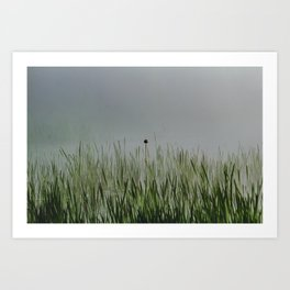 Old bullrush on a pond in the mist. Art Print
