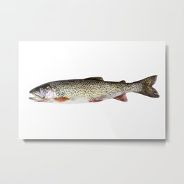 Cutthroat Trout in Perfect Condition on white background Metal Print