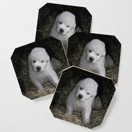 Great Pyrenees Puppy Coaster