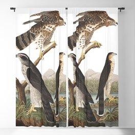 Goshawk, Birds of America, Audubon Plate 141 Blackout Curtain