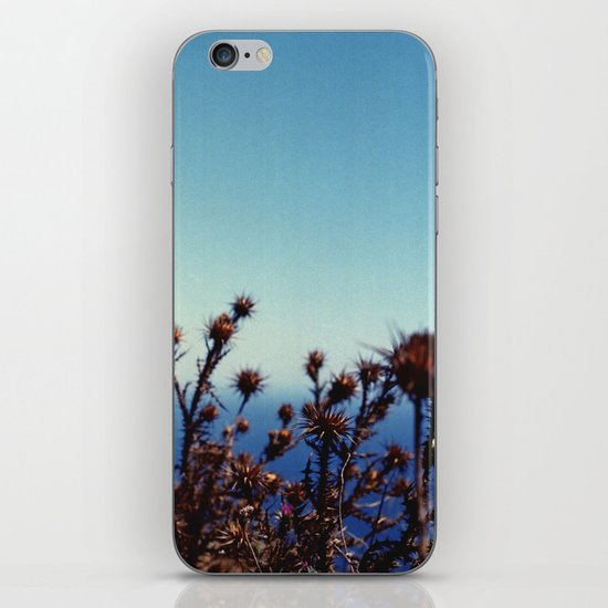 Sun-Bleached Blossom iPhone & iPod Skin