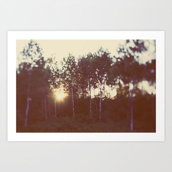 Silent Birch Art Print