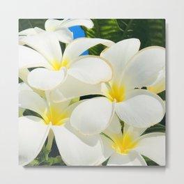 Hawaiian Plumeria Tropical Flowers Epic Macro Photo Metal Print