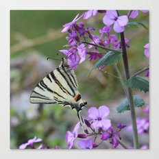 Scarce Swallowtail Butterfly on Pink Flowers Canvas Print